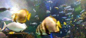 Des poissons du Ripleys Aquarium of Canada
